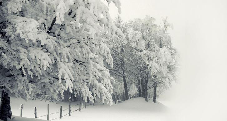 הנותן שלג כצמר