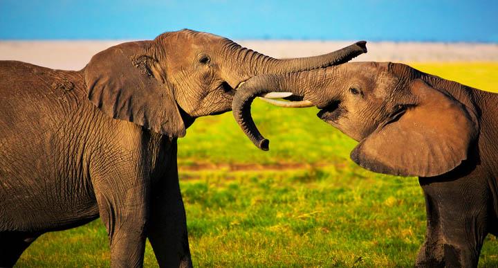 החדק של הפיל